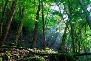 いらない山林の相続税を払う前に!プロが伝える5つの山林処分方法+α写真